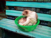 Tutto il gatto Fotografia Stock