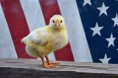 Tutto il pulcino americano con la bandiera Fotografia Stock Libera da Diritti