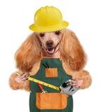 Tuttofare del cane immagine stock
