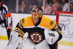 Tuukka Rask Boston Bruins Royalty Free Stock Photo