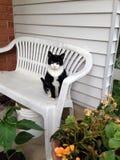 Tuxedo cat. Being a good boy Stock Image