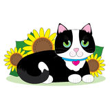 Tuxedo Cat Stock Photos