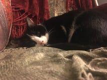 Tuxedo cat on chenille. Blankets royalty free stock photos