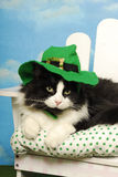 Tuxedo cat Leprechaun. A black and white tuxedo cat sits on a white chair wearing a floppy rimmed green leprechaun hat with buckle band Royalty Free Stock Images
