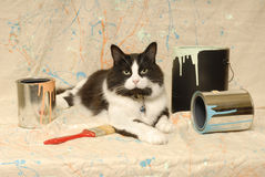 Tuxedo cat and paint cans. A black and white tuxedo cat lays between empty paint cans and brush on a splttered canvas backdrop stock images