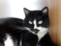 Tuxedo cat. Relaxing in the sun Stock Photo