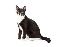 Tuxedo Cat Sitting to Side on White Stock Photography