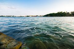 Tuxpan River, Mexico. Details of the river at Tuxpan, Veracruz State in Mexico stock photography