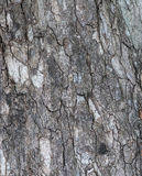 The tuxture on tree bark. Royalty Free Stock Image