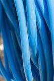 Tuyau bleu de tuyau d'arrosage Photographie stock