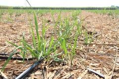 Tuyau d'irrigation par égouttement Images libres de droits