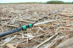 Tuyau d'irrigation par égouttement en vieille canne à sucre Images libres de droits