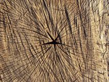 Tvärsnitt av ett träd royaltyfri fotografi