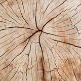 Tvärsnitt av fissured trä Arkivfoton