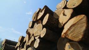 Tvärsnitt av trädet arkivfilmer