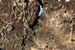 Tvärsnitt av trädet Arkivfoto