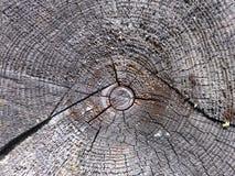 Tvärsnitt av trädet Royaltyfri Foto