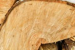Tvärsnitt av trädet Närbild Arkivbild