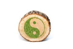 Tvärsnitt av trädstammen med det Ying yang symbolet royaltyfri bild