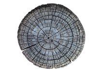 Tvärsnitt av treestammen Arkivbilder
