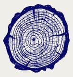 Tvärsnitt av treestubben Arkivbild