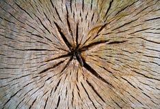 Tvärsnitt för trädstam royaltyfria foton