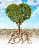 Tvärsnittet av jord som visar en trädhjärta som formas, med dess, rotar Royaltyfri Bild
