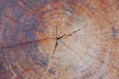 Tvärsnittjournaltextur, träbakgrunder Arkivfoton