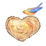Tvärsnittträd av en formad hjärta och fågeln Arkivfoto