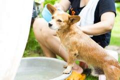 Tvätt av hunden Fotografering för Bildbyråer