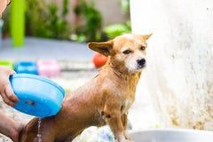 Tvätt av hunden Royaltyfri Foto