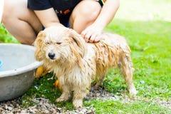 Tvätt av hunden Arkivbilder