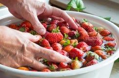Tvätt för jordgubbar för förberedelse för matlagning för jordgubbedriftstopp Arkivbild