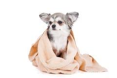 Tvätta hunden Arkivbild