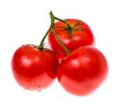 Tvättade nya mogna tomater med vattensmå droppar Royaltyfri Foto