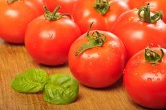 tvättade tomater Royaltyfri Fotografi