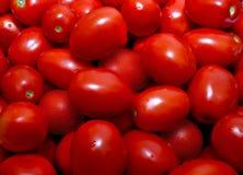 tvättade tomater Royaltyfri Bild