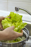 Tvättande ny grön sallad Royaltyfri Foto