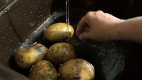 Tvättande rå potatis under vatten stock video