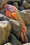 Tvättat upp fisknät Royaltyfri Bild