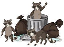 Tvättbjörn som söker avfall för mat stock illustrationer