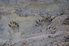 Tv?ttbj?rnsp?r i sanden vid plattafloden Nebraska royaltyfri foto