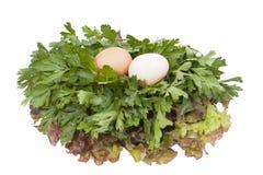 Två ägg Fotografering för Bildbyråer