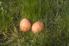 Två ägg på gräs Fotografering för Bildbyråer