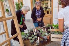 Två äldre damer väljer olika kakturs i krukor och suckulenter i en gatablomsterhandel arkivfoton