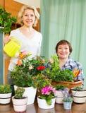 Två äldre kvinnor med blomkrukor Royaltyfri Foto