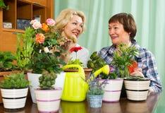 Två äldre kvinnor med blomkrukor Arkivbilder