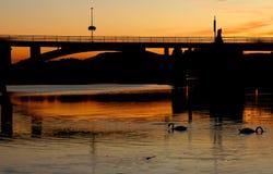 Två änder som simmar i floden på solnedgången royaltyfria foton