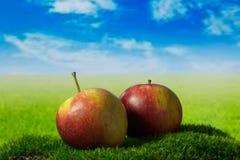 Två äpplen på den gröna ängen Royaltyfria Bilder
