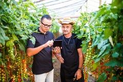 Två åkerbruka bondearbetare som ckecking beställningar av den körsbärsröda tomaten direktanslutet på minnestavlan från costumers  Arkivbild